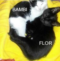 Bambi y Flor