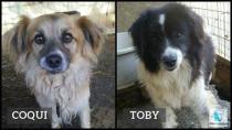 Coqui y Toby