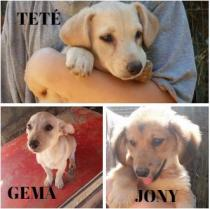 Teté, Gema y Jony